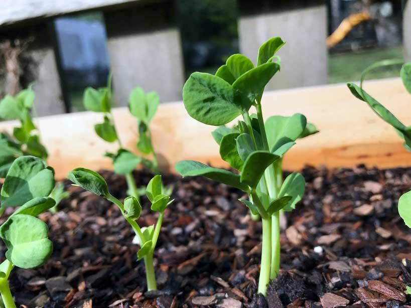 Seedlings planted by THE LANDers