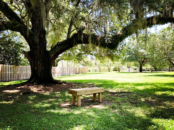 Oak Tree at the entrance of Spring Park. Kids from one of our local missions, Camp Can-U-Be Kind, made the wooden bench.