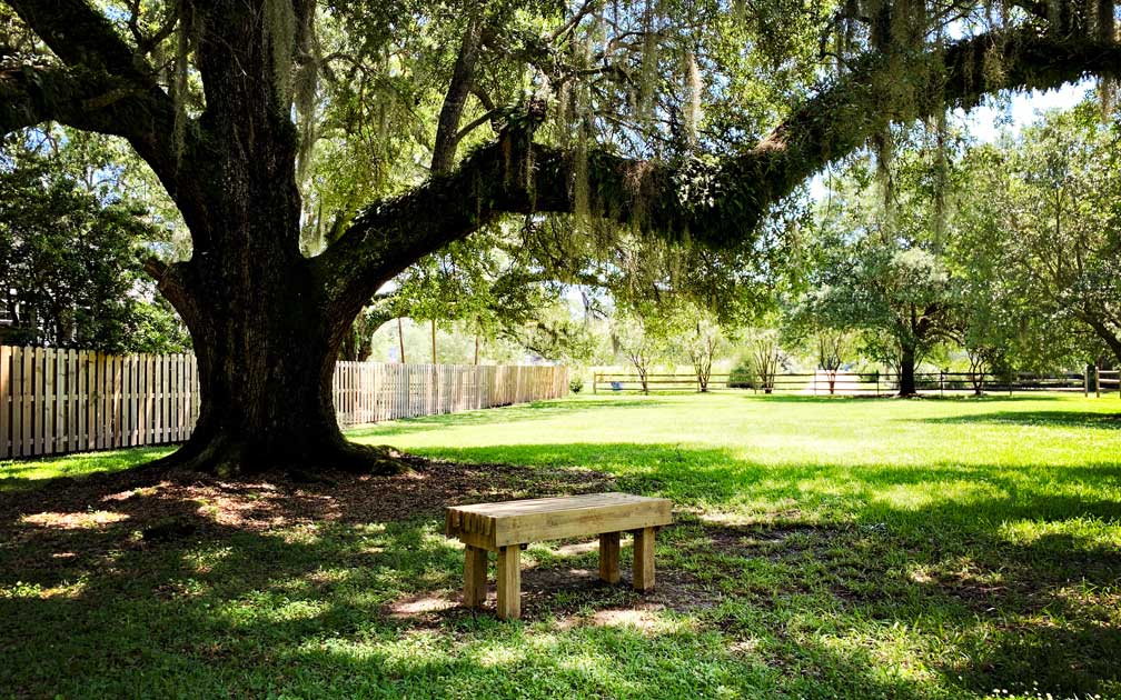 Camp Can-U-Be Kind Summer Camp Bench under Oak Tree Denham Springs